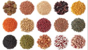 Seeds & Saplings